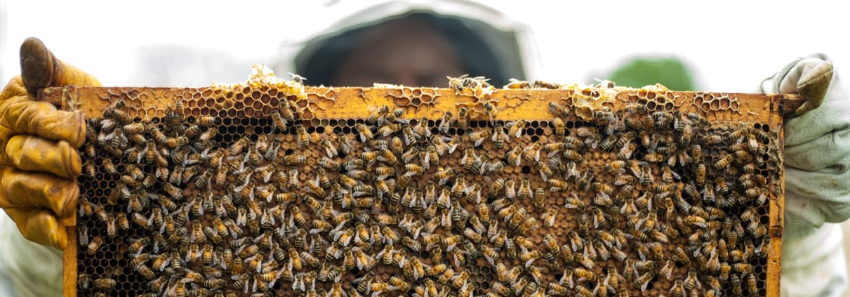 Noah's Bees & Products Grants Pass, OR